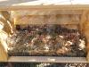 Šolski kompostnik